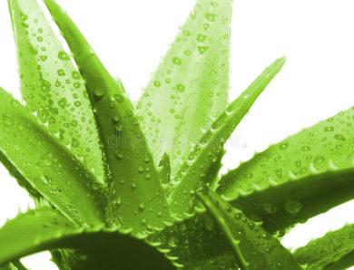 L'aloe vera contre l'acné : 6 façons d'aider à éliminer les imperfections tenaces